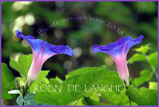 bloemen-99-beste-wensen-copy.jpg