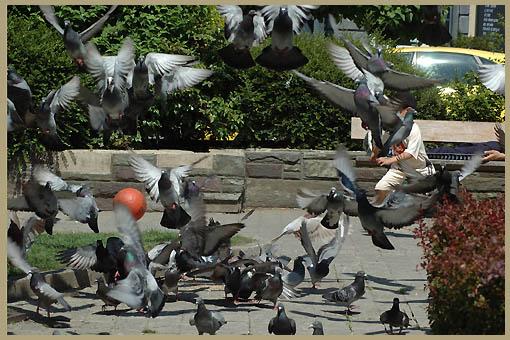 duiven-02.jpg