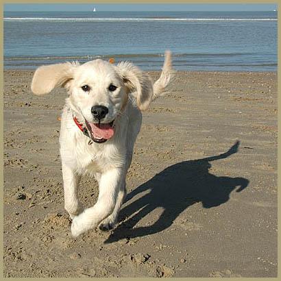honden-194.jpg