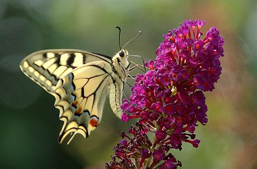 vlinders-45.jpg