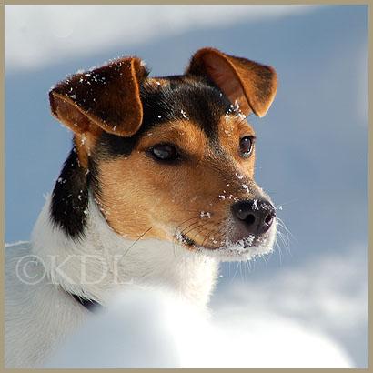 honden163blog.jpg