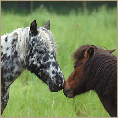 paarden-116.jpg