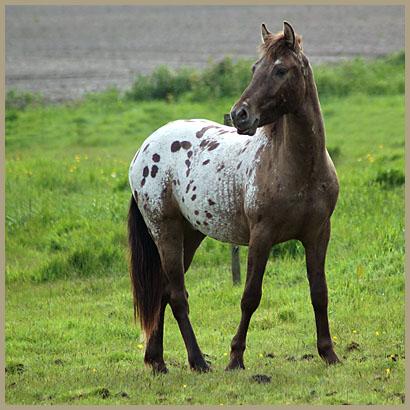 Paarden blog van fotogeniek belgi fotografie koen de langhe - Foto van keukenuitrusting ...