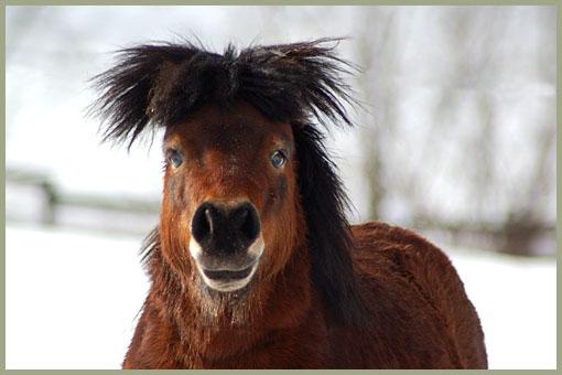 paarden-97
