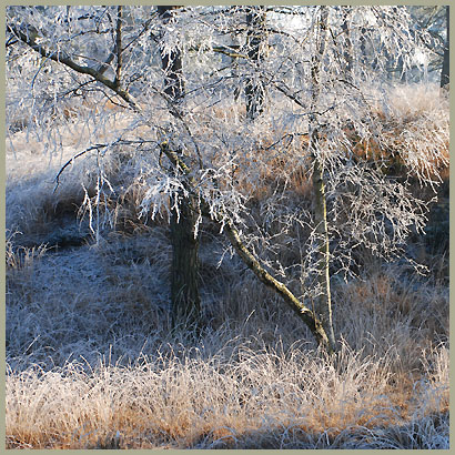 winter-197