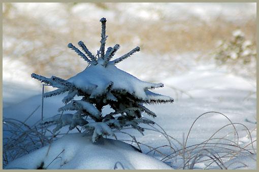 winter-65-bis
