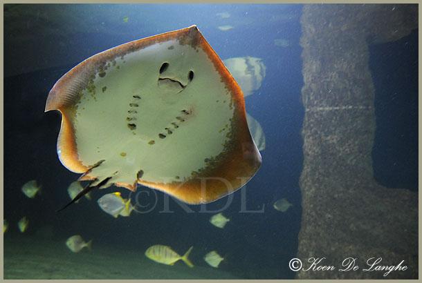 aquarium-01bis