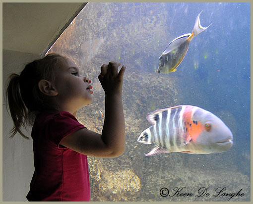 aquarium-06bis