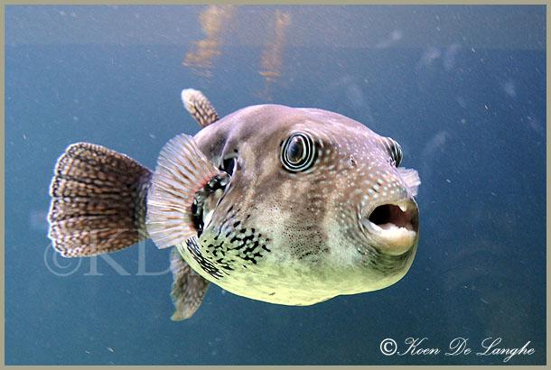 aquarium-12bis