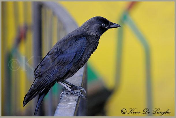 vogels-151-zoo