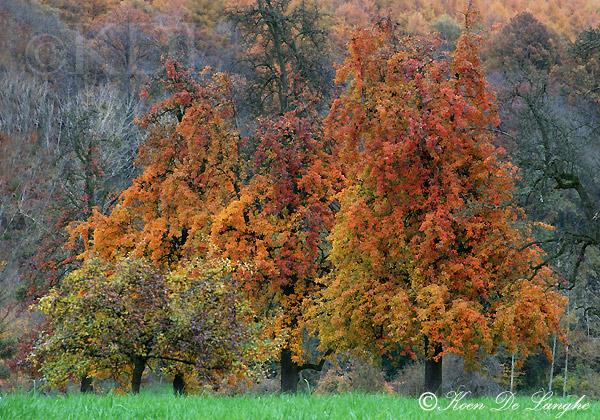 Voeren-herfst-blog