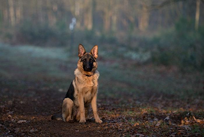 Honden-103
