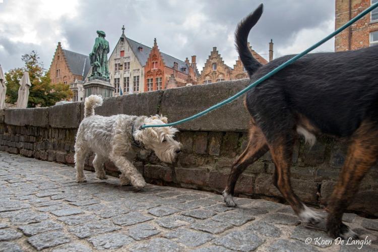 Brugge 115